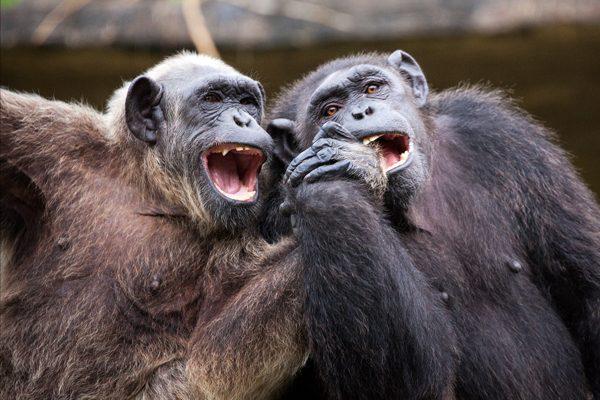FG-Monkey.jpg